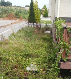 勝手口前も雑草に覆われていたお庭