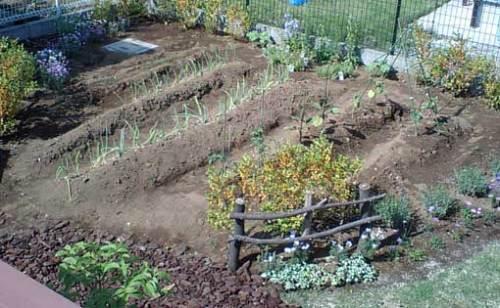 野菜を育てるための大きな畑