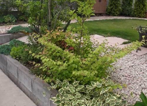 植栽のスペース