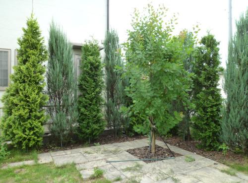【剪定前 庭木や雑草の手入れは大変です】