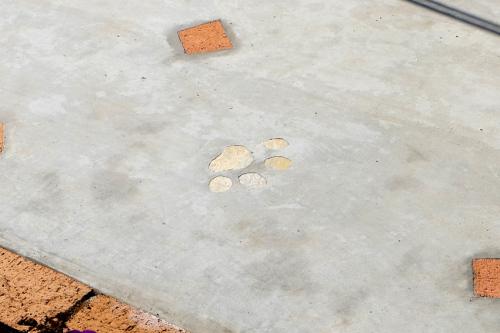 コンクリートの中にワンちゃんの足跡の模様を入れた写真