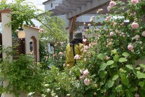 【バラのある中庭】
