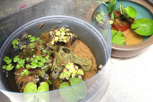 水草やメダカが泳ぐ水鉢の写真