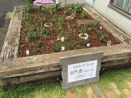 ビズガーデニングの家庭菜園