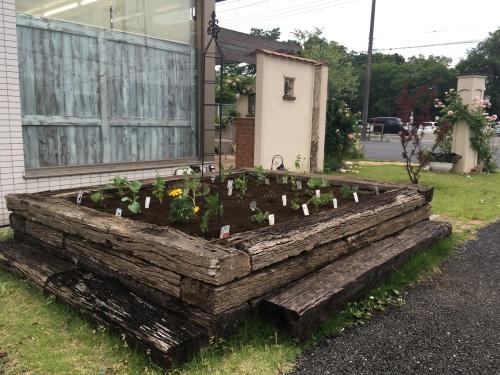 ビズ菜園1