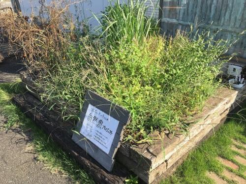 9月の菜園