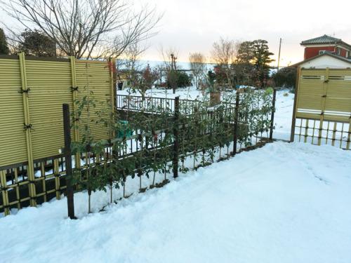 施工後写真 レッドロビンの生垣と竹垣を少し重ねて設置