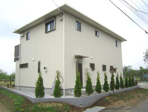 コニファー「エレガンテシマ」を列植した家回りの写真