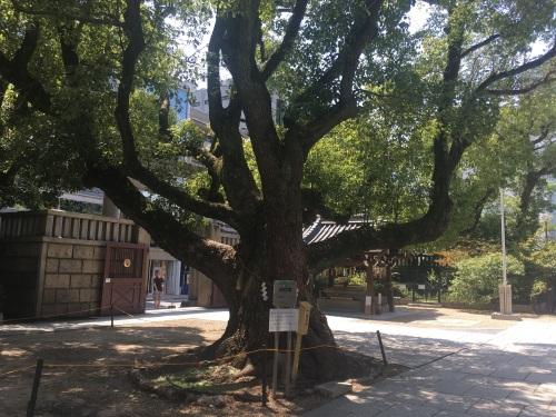 難波神社クス