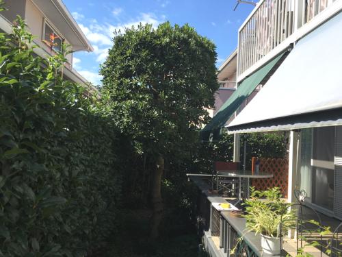 リフォーム前 大きくなりすぎた生垣とお庭の様子