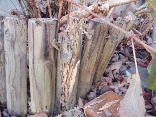 【お庭の木杭の被害】