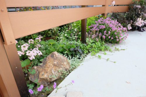 駐車場側に植物が溢れるように咲いている写真