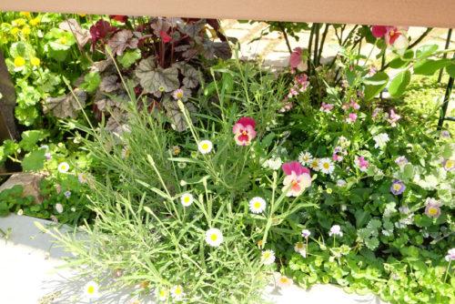 フェンスの下に見える可憐な花の写真