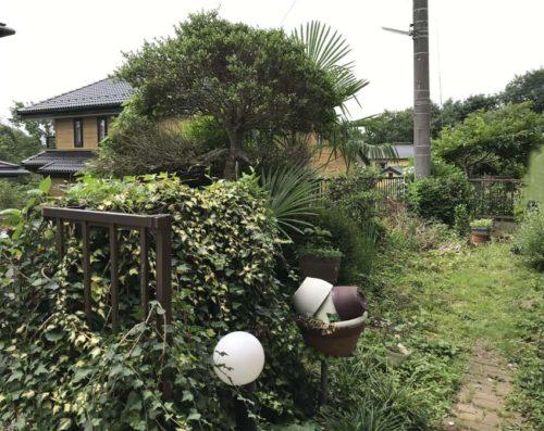 施工前のお庭の写真。伸び放題の植物で鬱蒼としています。