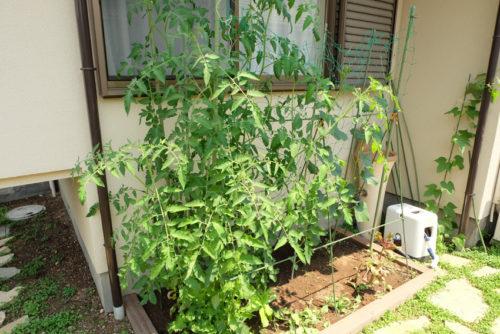 家庭菜園設置後